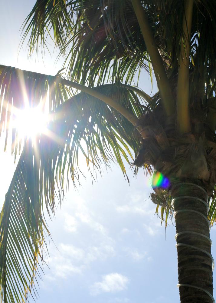 Travel Diary: Mexico - Riviera Maya | The Daily Dose