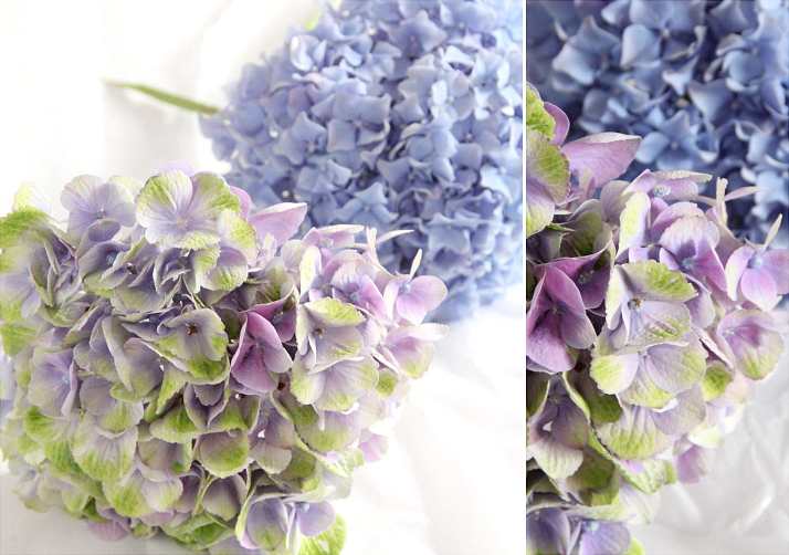 Flowers of Summer: Hydrangea