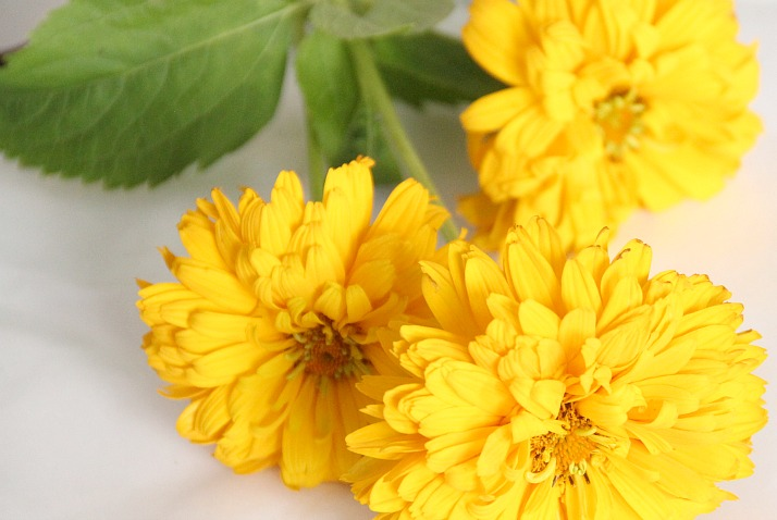Flowers of Summer: Oxeye Sunflower