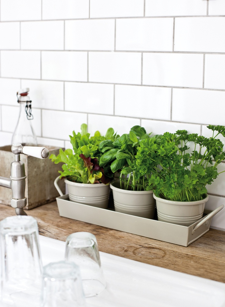 Kitchen Herbs 101 | Love Daily Dose