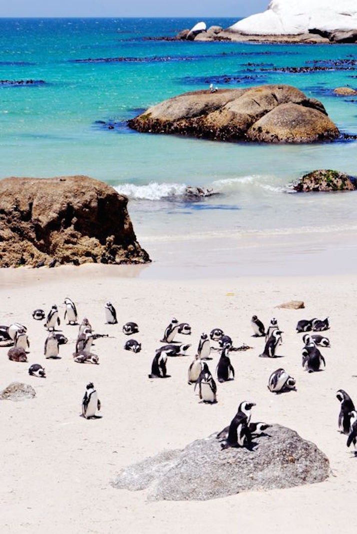 Warm Winter Destinations: Cape Town | The Daily Dose