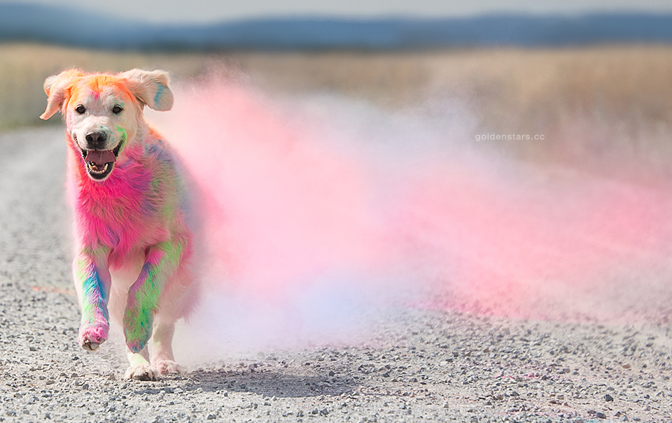 Job Report: Dog Photographer | The Daily Dose