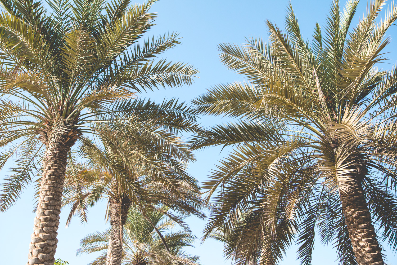 Things-To-Do-Abu-Dhabi-51
