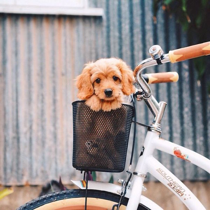 Inspire: Puppy Love | The Daily Dose