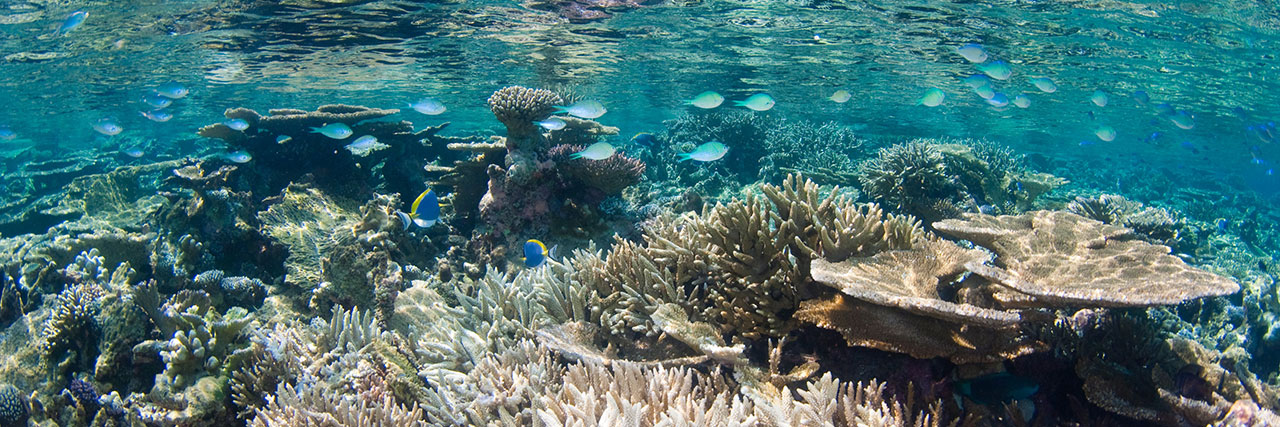 Wanderlust: Park Hyatt Hadahaa Maldives | Love Daily Dose