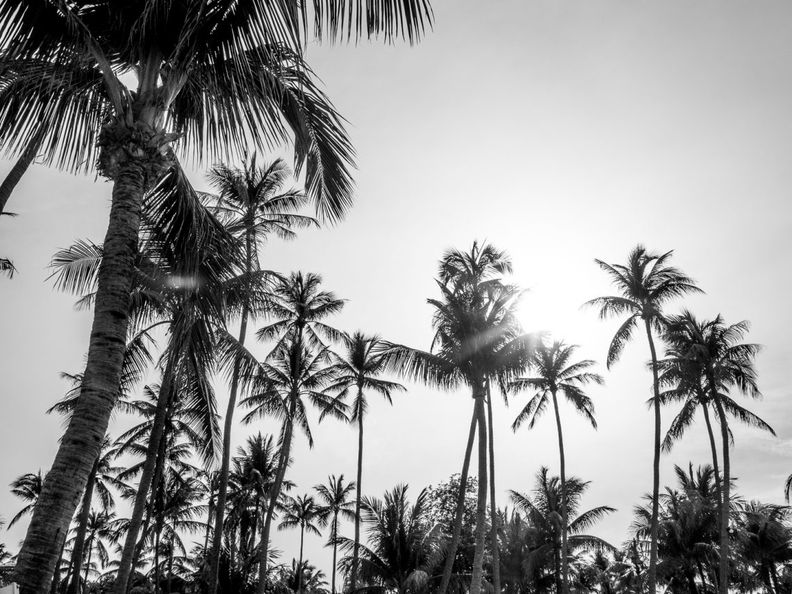 Etsy Picks: Palm Obsession