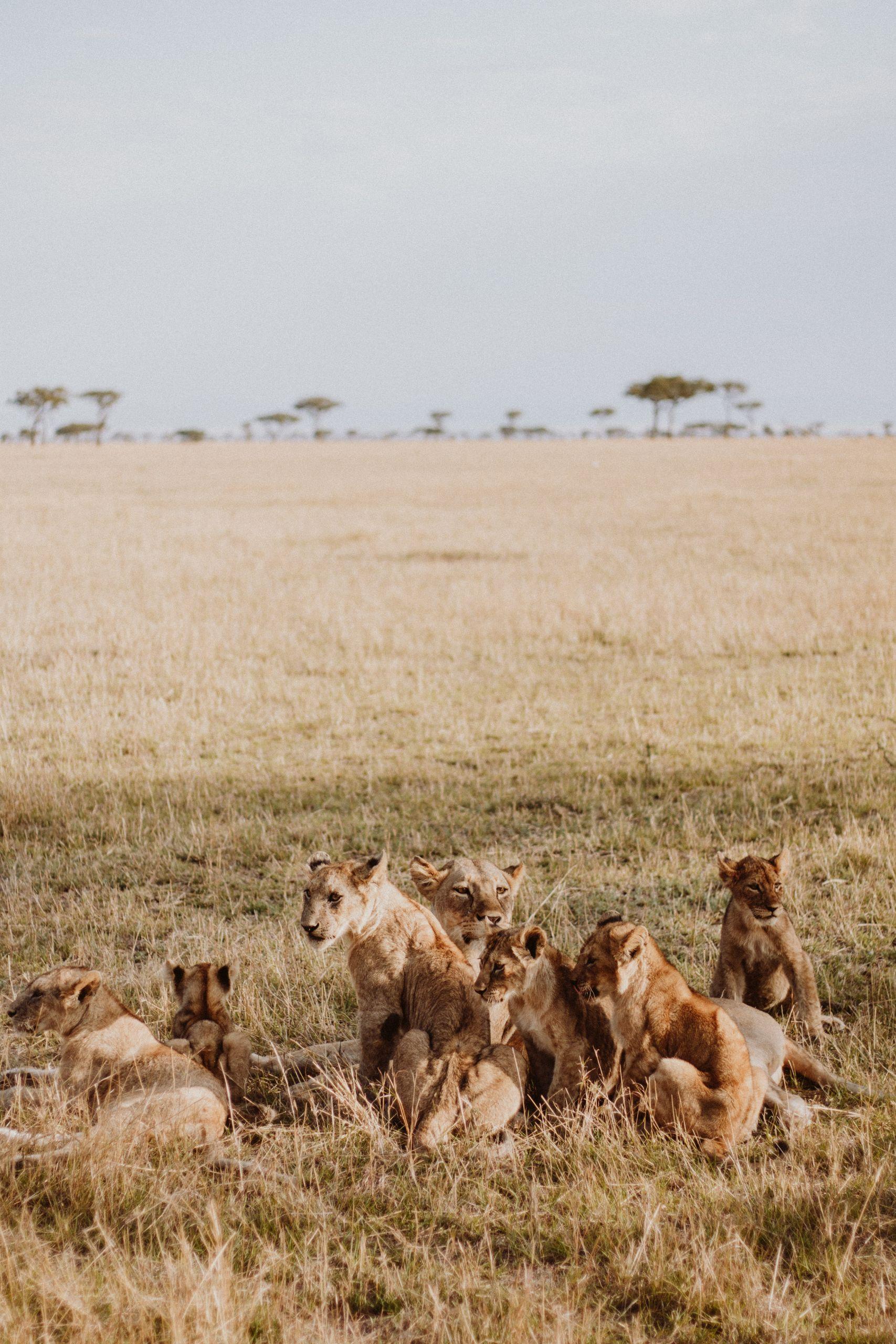Travel Inspiration Safari | The Daily Dose
