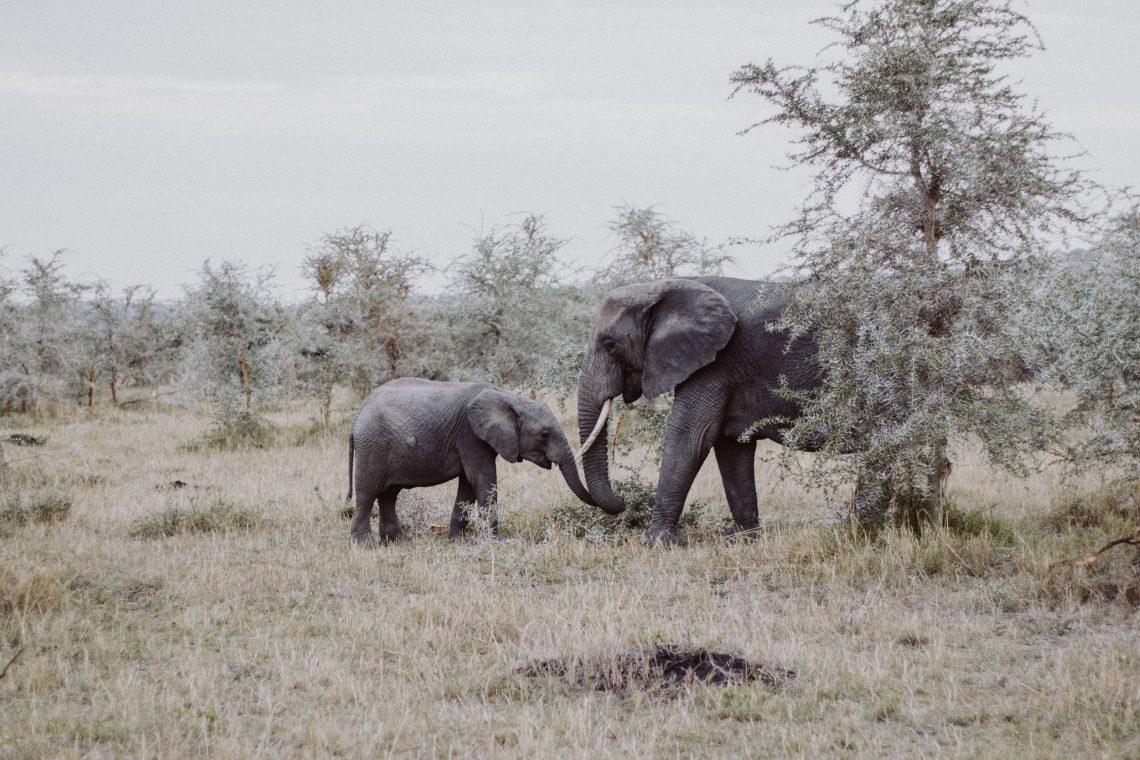 Travel Inspiration: Safari