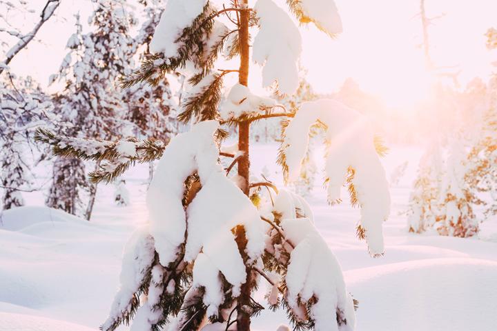 Inspire: Winter Wonderland