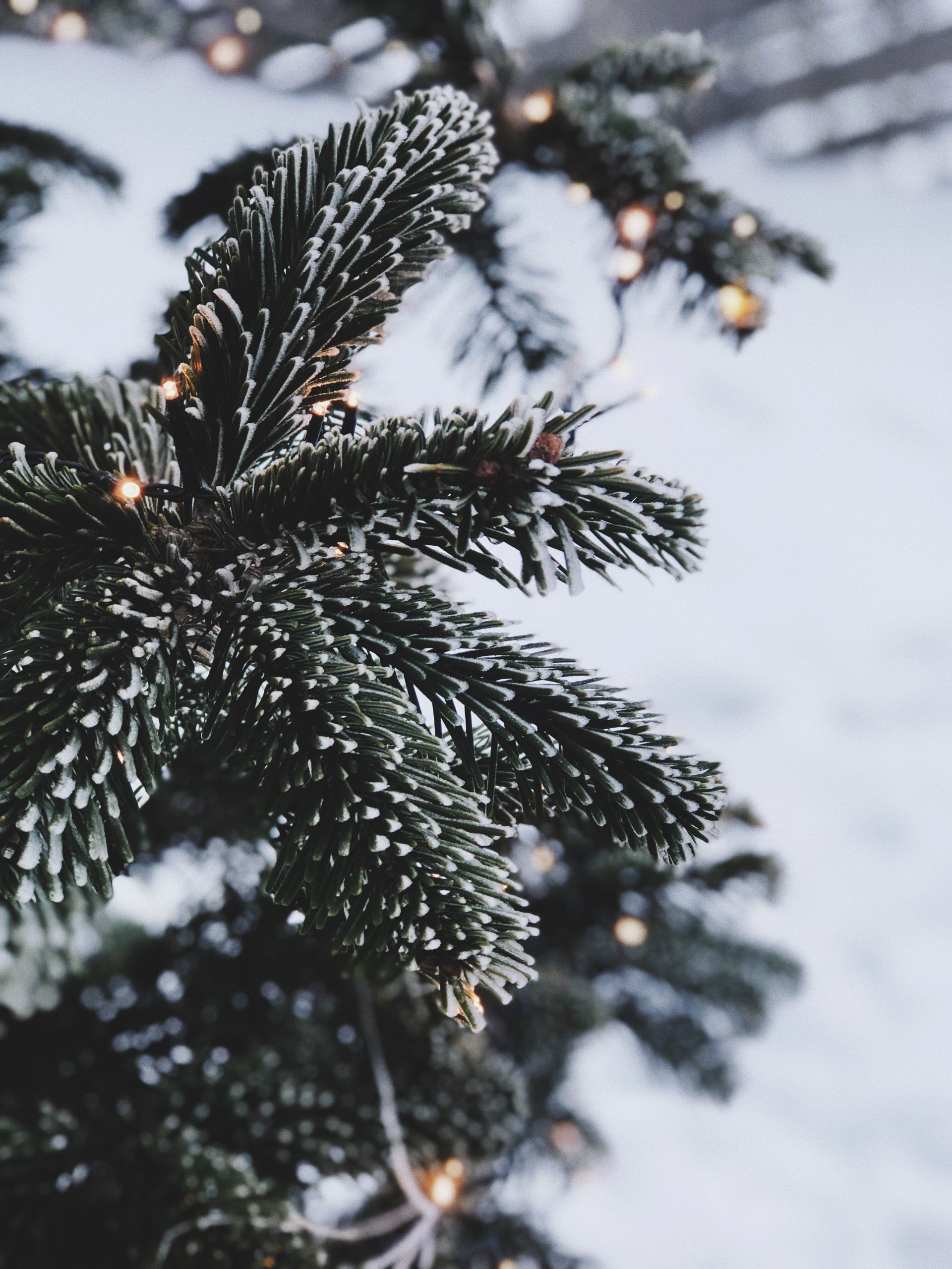 Home For The Holidays | Love Daily Dose