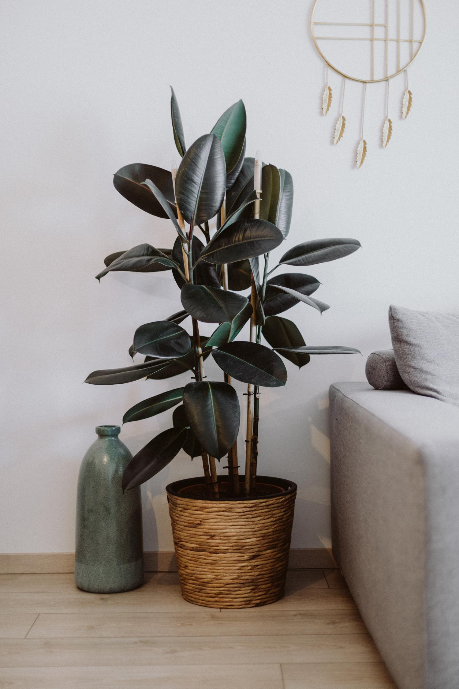 die besten pflanzen f r die wohnung love daily dose. Black Bedroom Furniture Sets. Home Design Ideas
