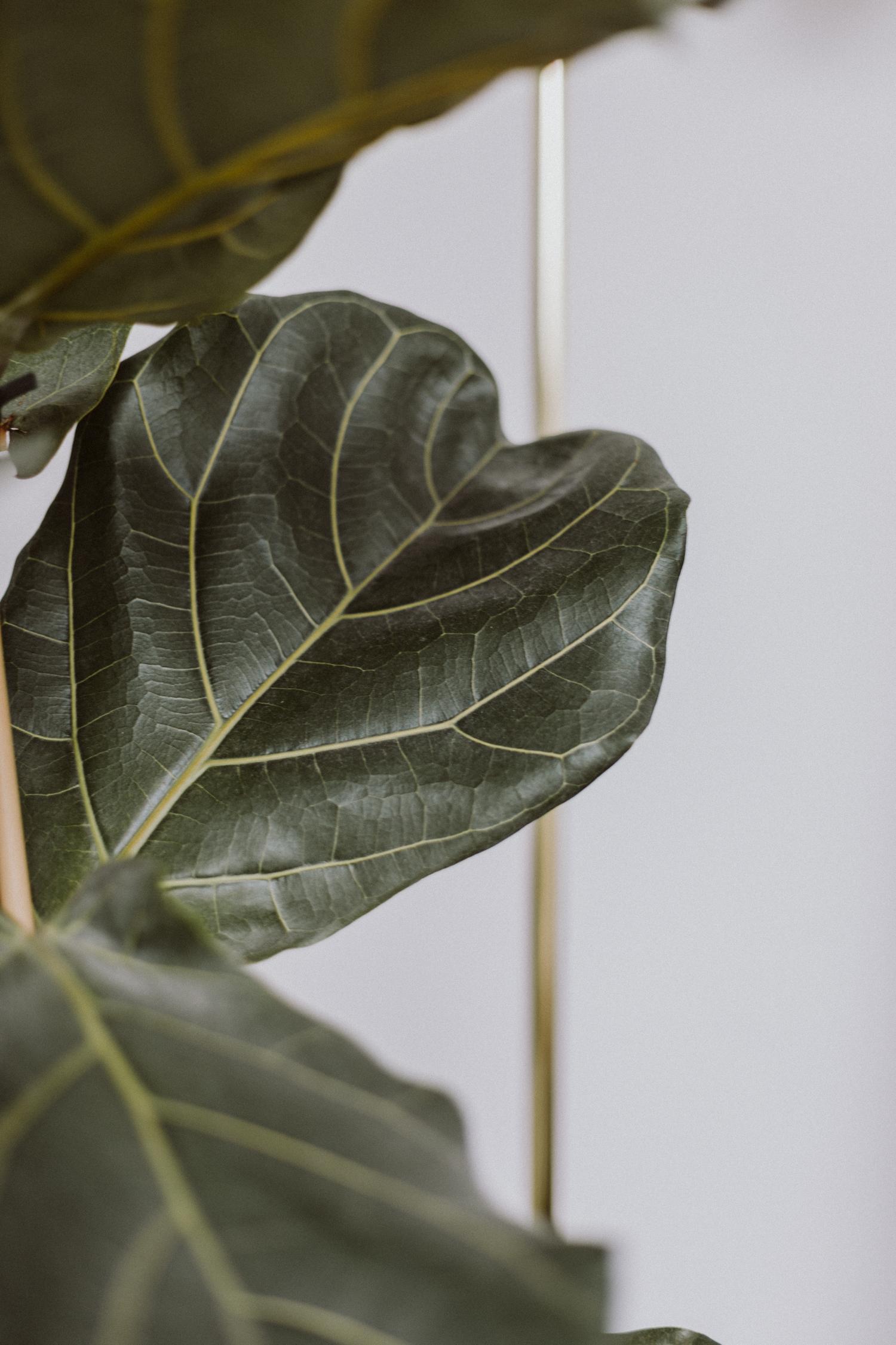 Pflegeleichte Pflanzen für die Wohnung - Love Daily Dose