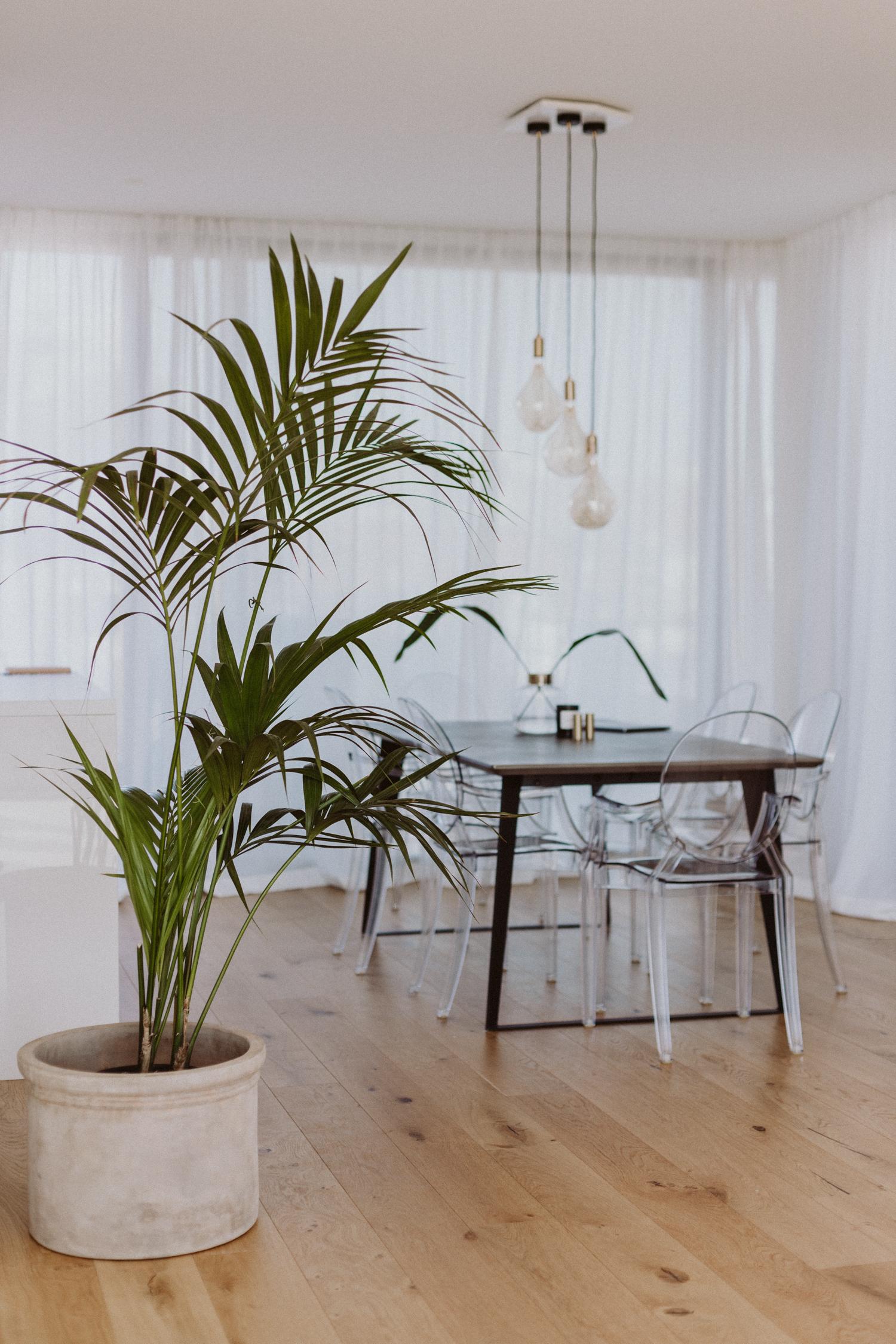 Die besten Pflanzen für die Wohnung - Love Daily Dose