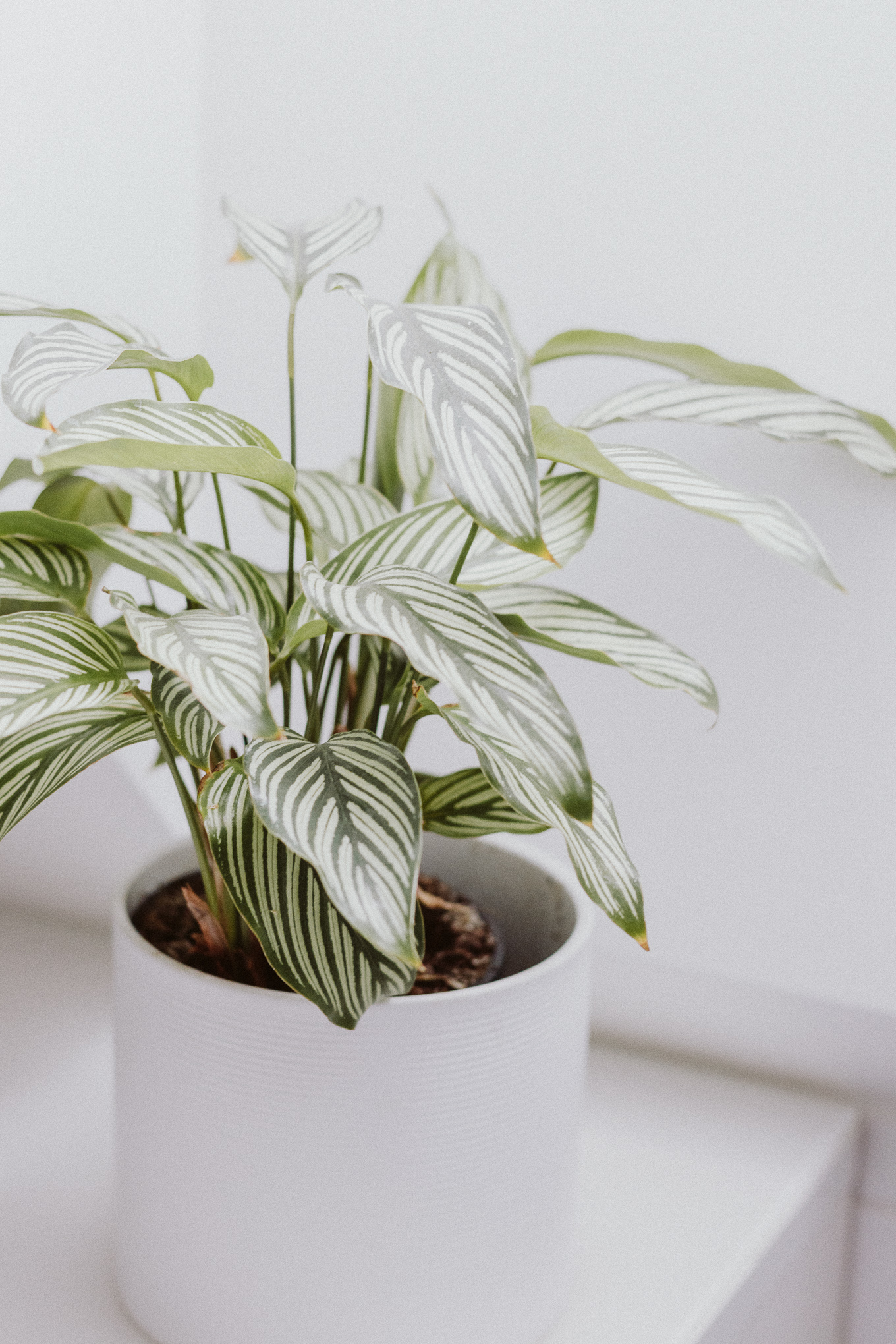 The Daily Dose Pflanzenpflege