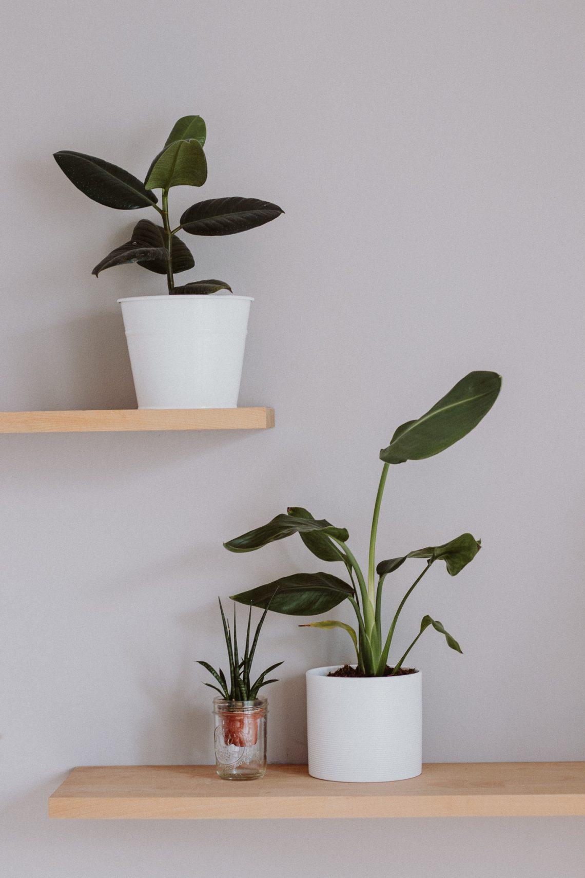 Pflanzenpflege 101