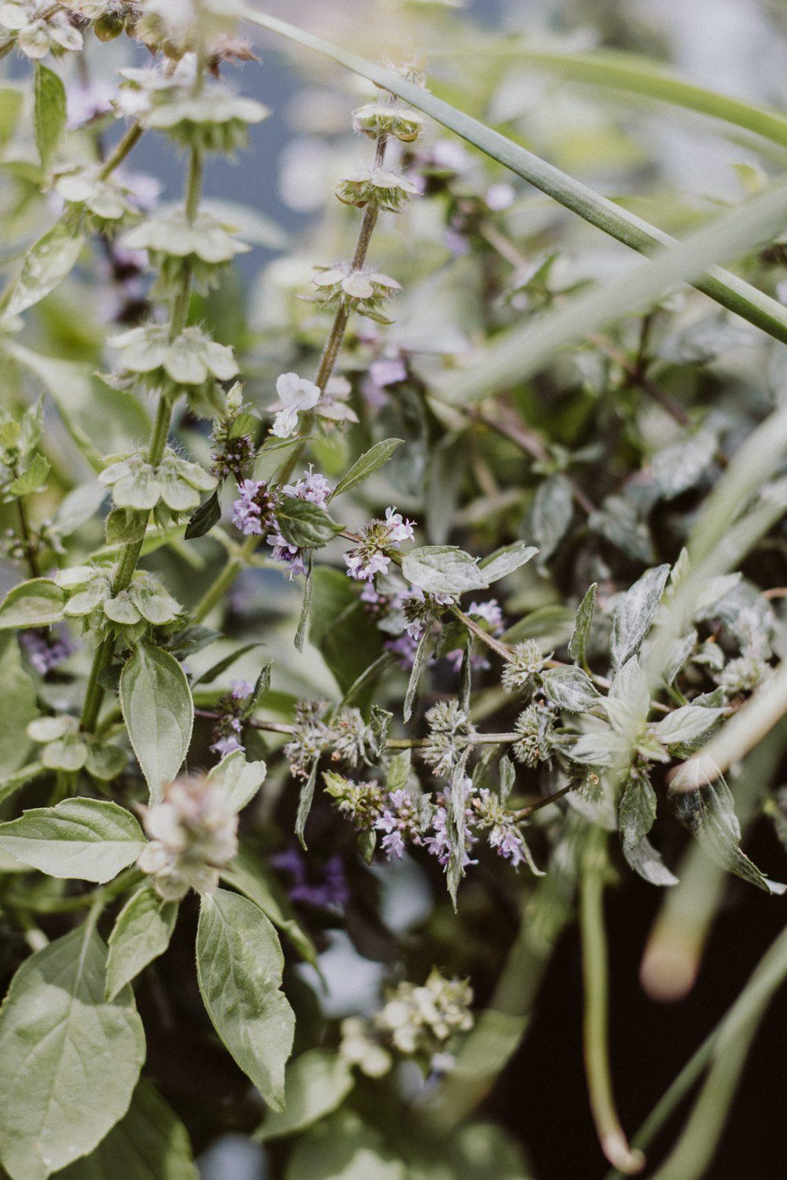 Kräuterverwertung – den Sommer konservieren